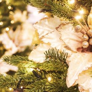 Fiori natalizi