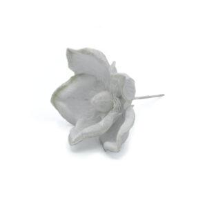 Magnolia bianca diametro 13 cm